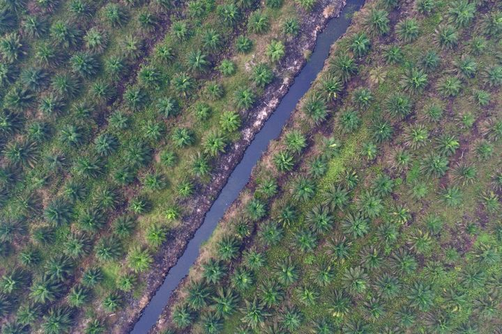 Vegetation grows on a palm oil plantation in this aerial photograph taken in Ogan Komering Ilir, South Sumatra, Indonesia, on