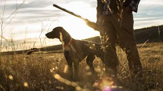 Man upland bird hunts with his German Shorthaired Pointer during sunset in Montana.