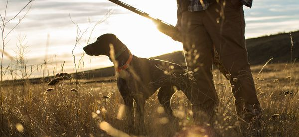 Dog Shoots And Hospitalizes Hunter In Freak Accident