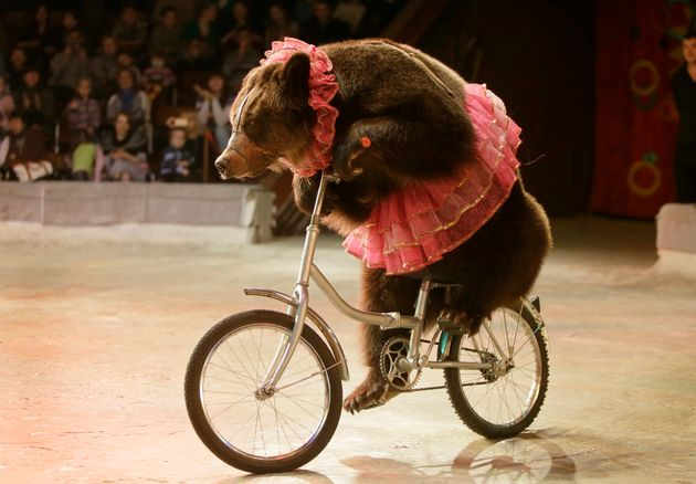 "<span class='image-component__caption' itemprop=""caption"">A bear performs on a bike in Ukraine's National Circus in 2013.</span>"