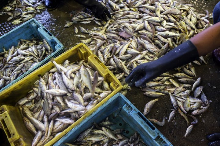 Workers sort fish by its size into baskets at the Talay Thai fish and seafood wholesale market in Mahachai, Samut Sakhon prov