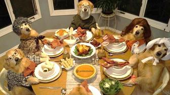 This family of six may have 24 legs and six tails between them, but when it comes to celebrating Thanksgiving they may not be unlike your own.