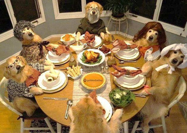 Image result for Dogs at Thanksgiving
