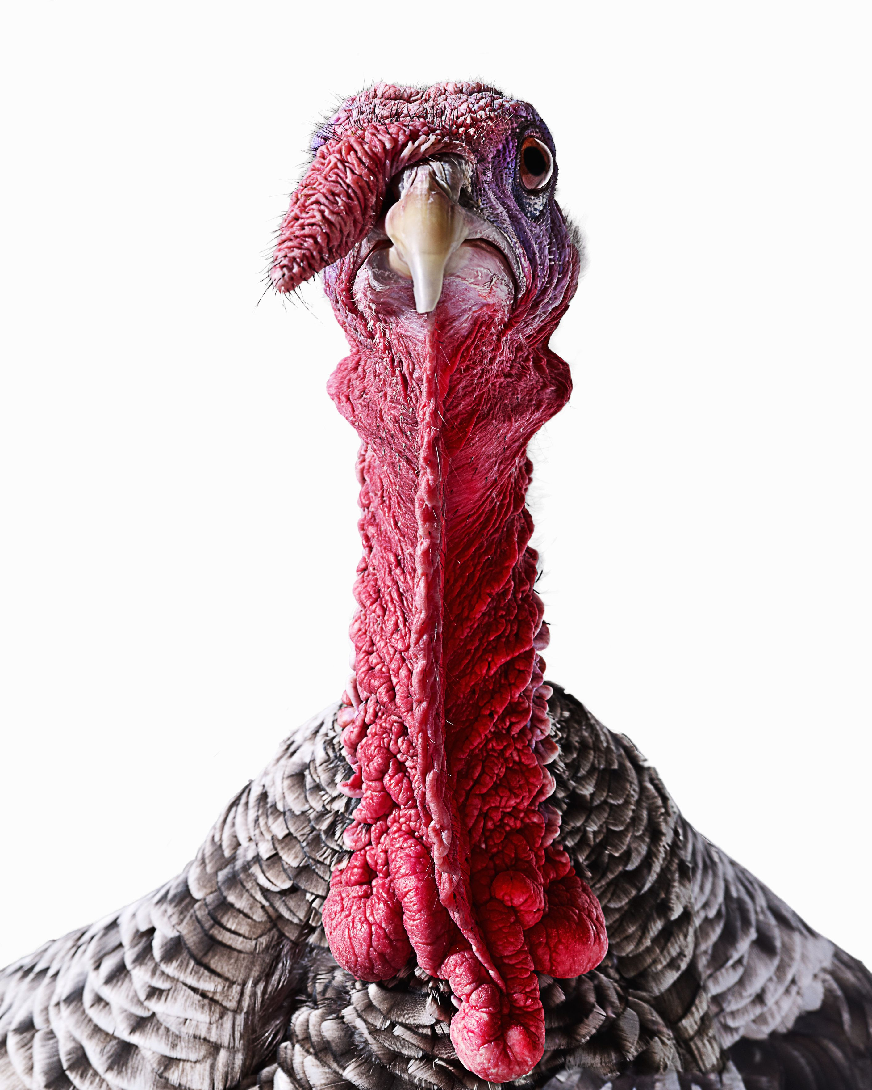 Behold: the famed turkey head.