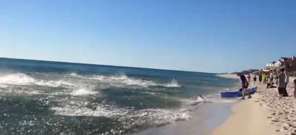 Sharks Celebrate Thanksgiving Early With Feeding Frenzy At Florida Beach