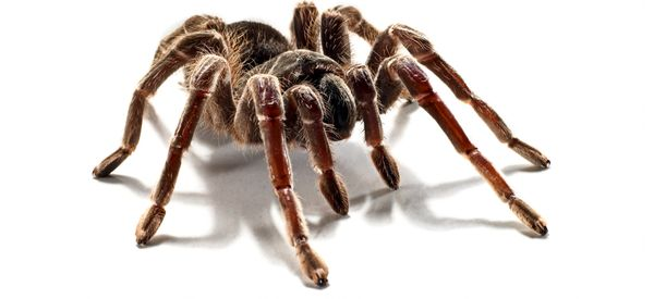 Cops Rush To Death Threats And Screams -- Of Spider-Chasing Man