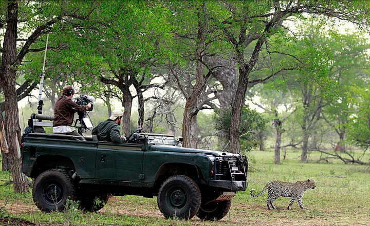 A WildEarth guide and cameraman film Karula, a female leopard, in the Djuma Game Reserve near Kruger National Park.