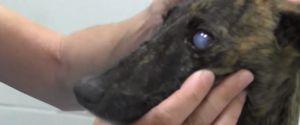 DOG ABUSE DOG NEGLECT ANIMAL ABUSE ANIMAL NEGLECT ANIMAL RESCUE DOG RESCUE