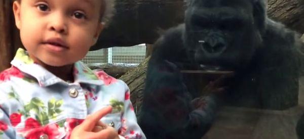 Watch Gorilla Teach Little Girl How To Flip Middle Finger
