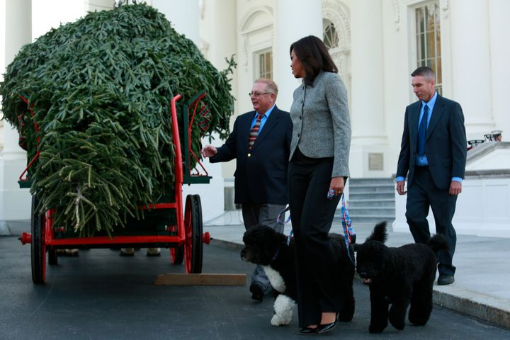 The tree is aFraser fir from Lansdale, Pennsylvania.