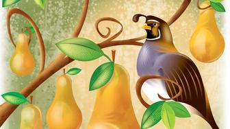 USA - 2008:  Laurie McAdam color illustration of a partridge in a pear tree. (The Modesto Bee/MCT via Getty Images)