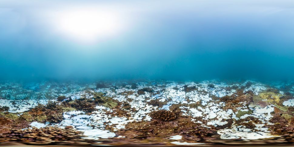 A bleached reef in Kahului Point, off the coast of Maui, Hawaii. This photo was taken on Nov. 6, 2015.