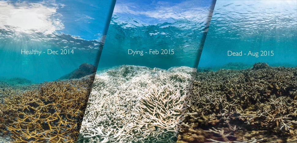 These photos were taken at three different times just 8 months apart near American Samoa.