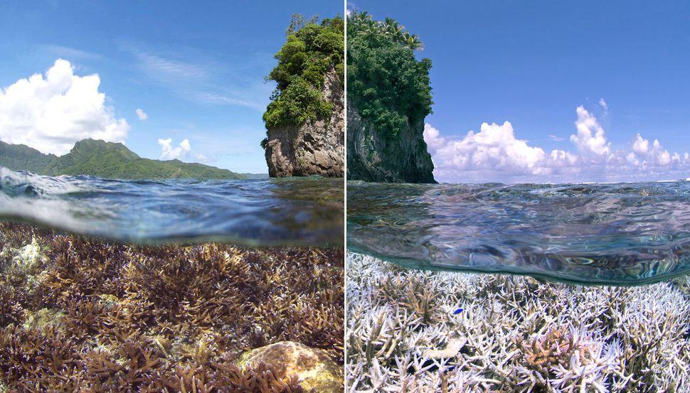 A reef bleached off American Samoa.