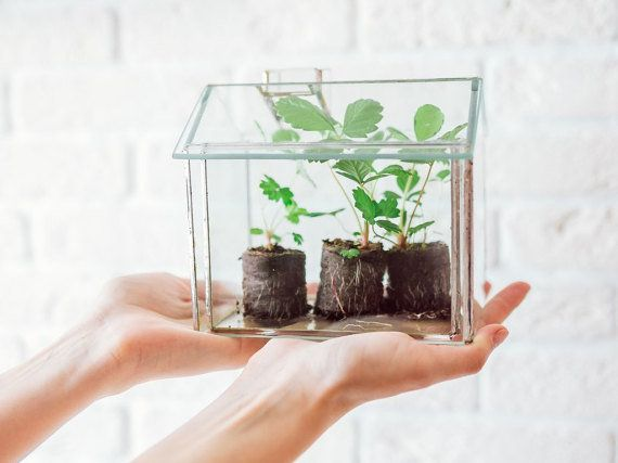 """<a href=""""https://www.etsy.com/listing/239207961/small-greenhouse-geometric-glass"""">Small greenhouse</a>, and it's perfect for"""