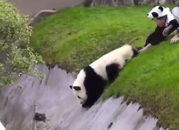 We Need To Talk About This Weird Panda Video