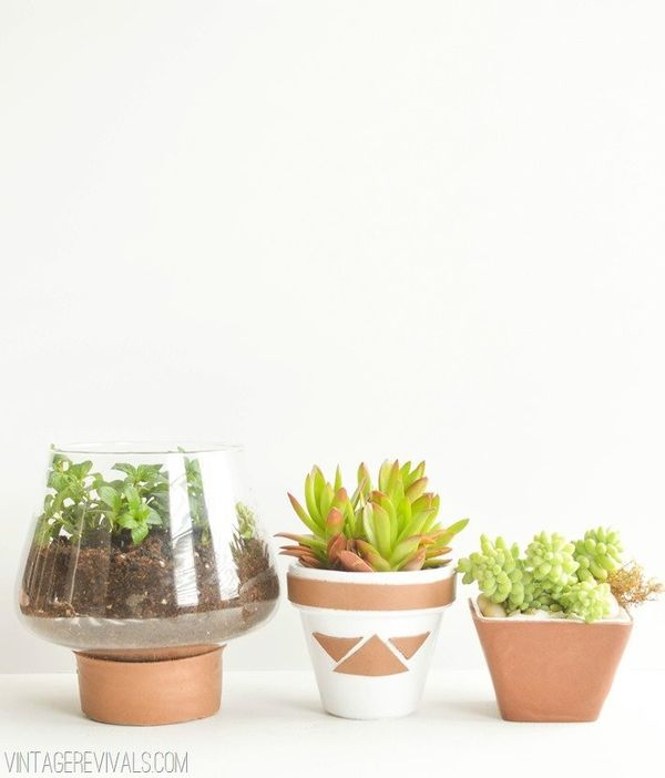 Got a friend who needs a companion that's cute like a cat, but doesn't require as much attention? Get them a plant. When you