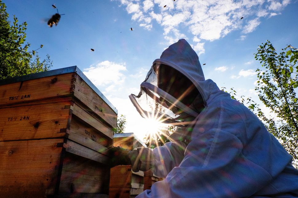 Beekeeper Dave Whyman adjusts one of his hives after moving them to the site of a new apiary on Aug. 8, 2015, in Lealholme, E