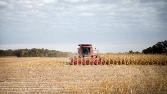 BURLINGTON, IA - OCTOBER 22:  Rick Wirt harvests corn on October 22, 2015 near Burlington, Iowa. Wirt and his daughter Krista Kempker farm more than 2,000 acres in th area. According to the National Corn Growers Association, the overall corn crop is on track to have the 2nd highest average yield on record    (Photo by Scott Olson/Getty Images)