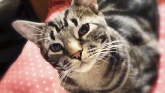 I Met My Husband Through a Cat
