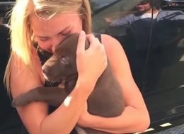 Boyfriend 'Pups' The Question With A Precious Chocolate Lab