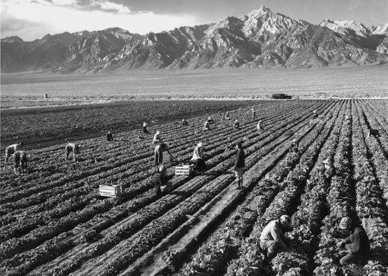 Potato Field, 1943