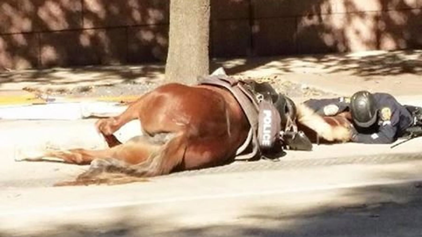 Emotional Photo Captures Police Officer Comforting His Dying Horse