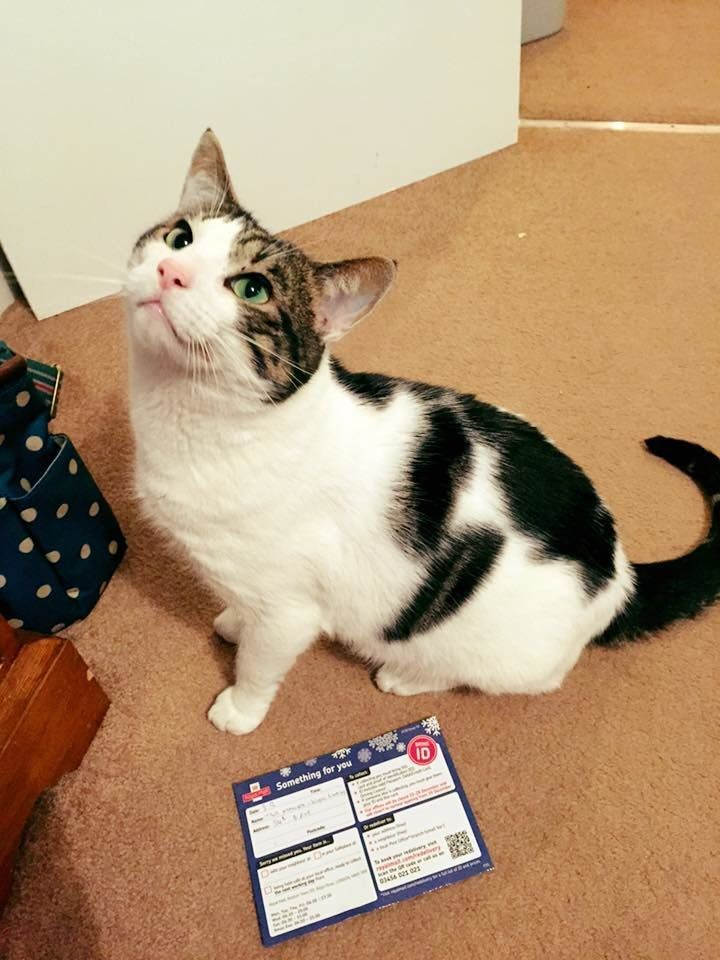Paws off: This tabby cat named Ted became tangled in red tape when he was mailed a package but couldn't produce ID to accept it at the post office.