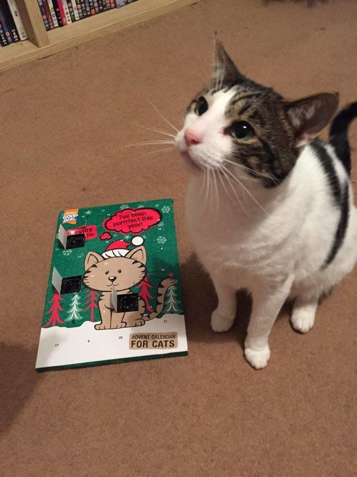 Happy tale: Ted ended up getting his cat advent calendar in the end, which