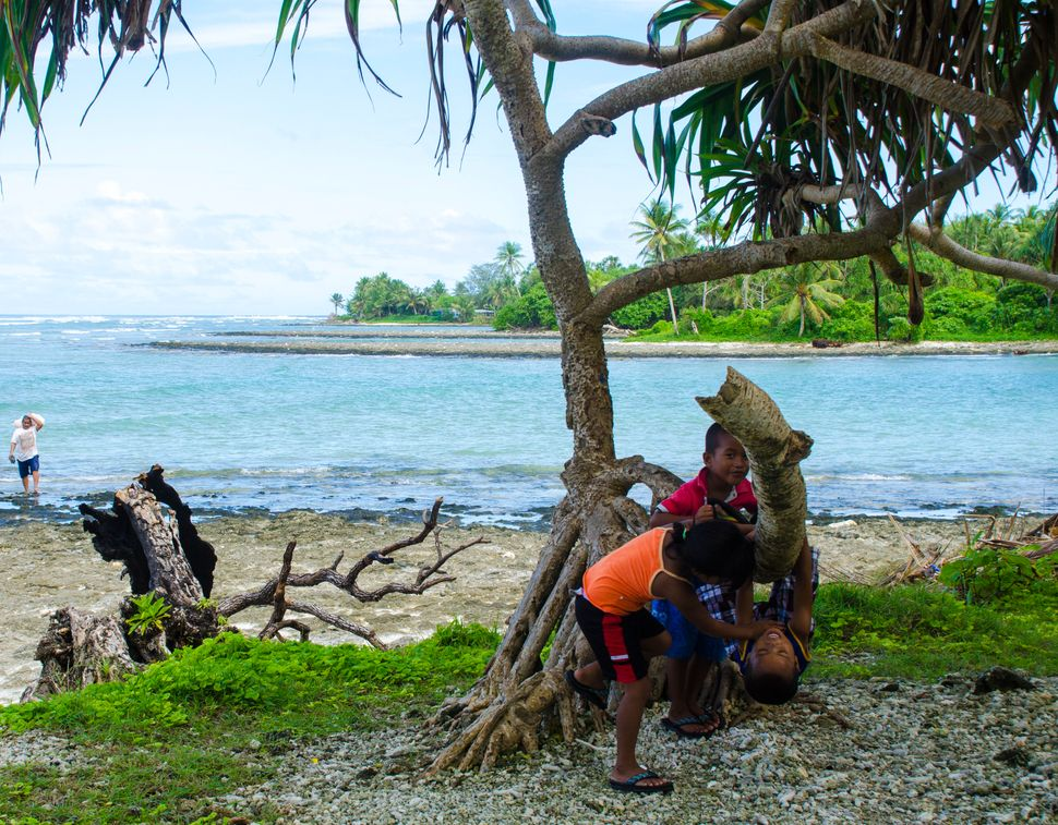 Children play among the branches of a pandanus tree on the coast of Ejit Island.