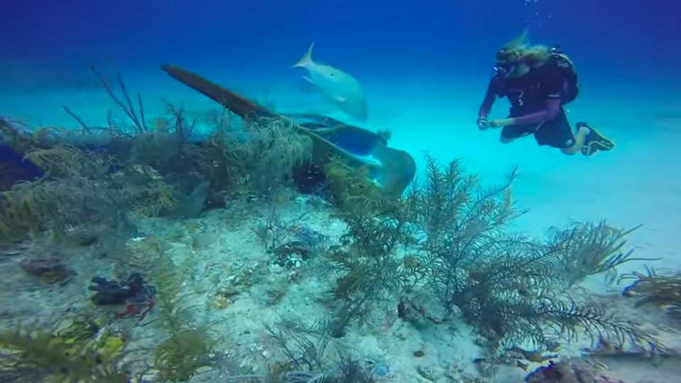 The anchor is seen digging into the edge of the coral reef.