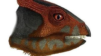 Researchers have described a new species of plant-eating dinosaur, Hualianceratops wucaiwanensis, that stood on its hind feet and was about the size of a spaniel.