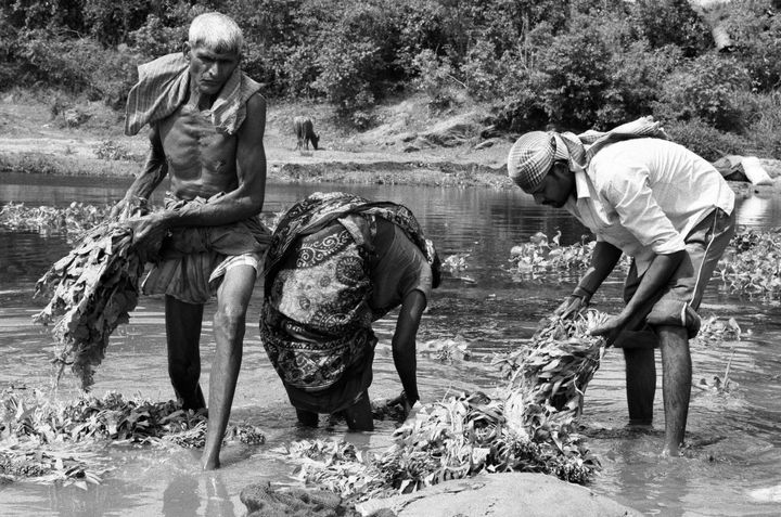 People wash leafy vegetables ina riverwhere nuclearwaste is released. The vegetables are then sold in local