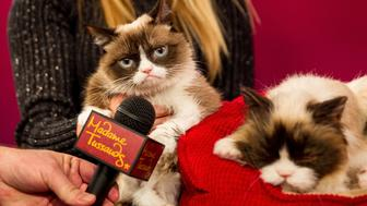 SAN FRANCISCO, CA - DECEMBER 08:  Grumpy Cat refuses an interview at Grumpy Cat animatronic launch at Madame Tussauds San Francisco on December 8, 2015 in San Francisco, California.  (Photo by Miikka Skaffari/Getty Images)