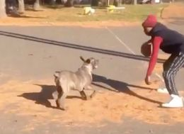 Crossover Dribble Jukes This Dog Off Its Game