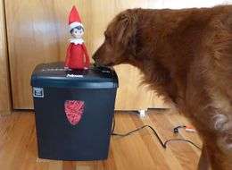 These Dogs Are Waging War Against The Elf On The Shelf