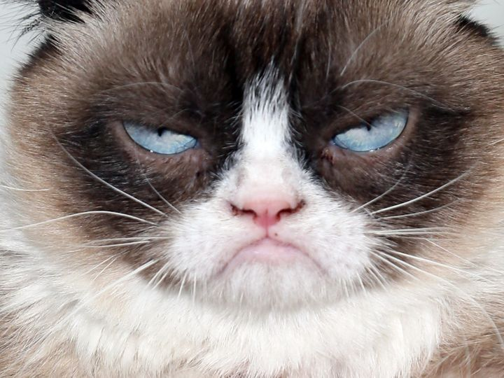 Grumpy Cat, whose real name is Tardar Sauce.