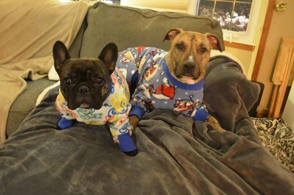 22 Animals Wearing Pajamas Just Because Huffpost