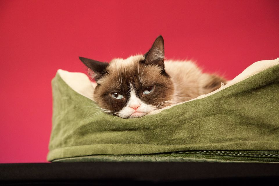 SAN FRANCISCO, CA - DECEMBER 08:  Grumpy Cat makes an appearance at Madame Tussauds San Francisco on December 8, 2015 in San