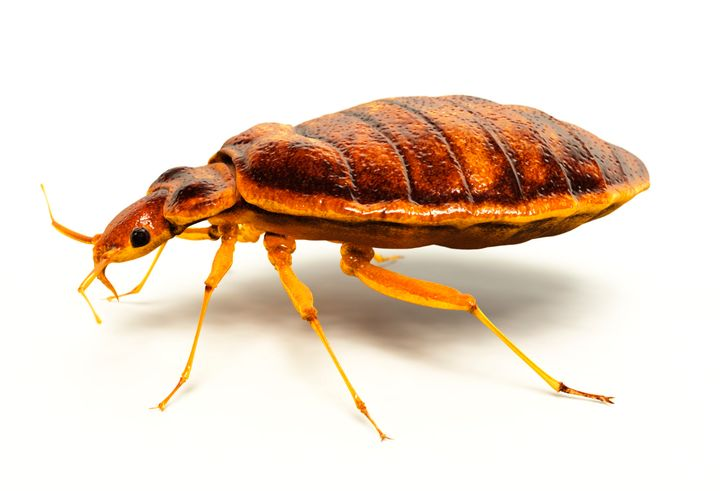 Bed bugs: a changin' near you.
