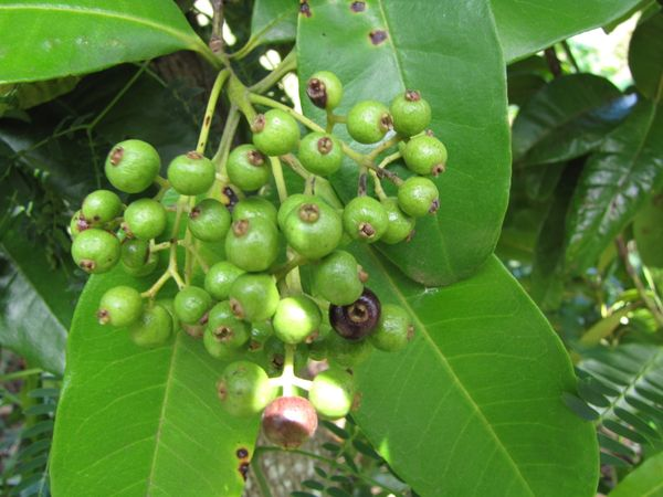 So What Exactly Is Allspice, Anyway?