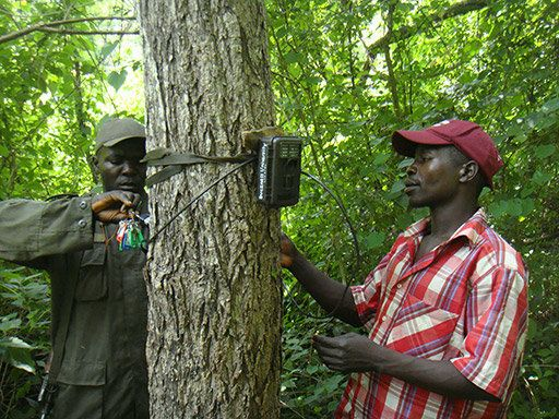 A wildlife ranger and a community wildlife ambassador helping to install cameras in the South Sudan forests.