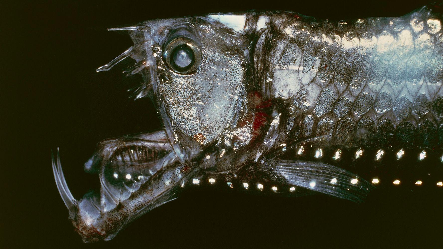 самый обитатели глубин океана фото окрашивание