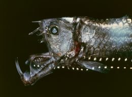 The 10 Most Bizarre Deep Sea Creatures You'll Ever See