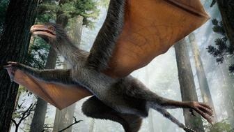 """This illustration provided by Dinostar Co. Ltd. shows the dinosaur, Yi qi, which is Mandarin for """"strange wing."""" Dinosaurs normally used feathers for flight, but the newly discovered creature evidently had wings made of skin instead, like a bat's, described in a paper released by the journal Nature on Wednesday, April 29, 2015. Though it's not clear whether they flapped or merely let the creature glide. (Dinostar Co. Ltd. via AP)"""