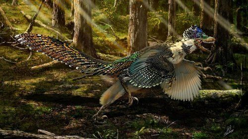 Well-preserved fossils found in China turned out to belong to a close relative of the Velociraptor. They sugge