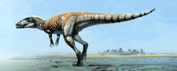 With 10-inch claws, what else could scientists name this thing? The extraordinary meat-eating dinosaur was discover