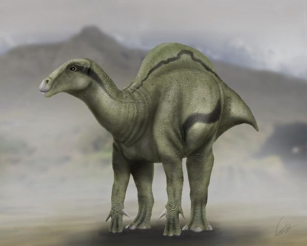 Some 125 million years ago, these strange fellows wandered around what is now Spain. Their sail-like humpback stood abou