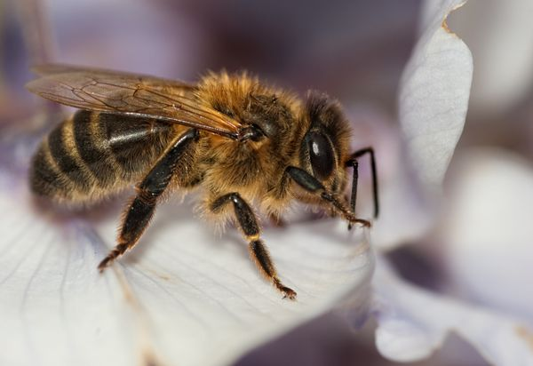 "<a href=""http://pe.usps.gov/text/pub52/pub52c5_008.htm"">Honeybees and their queens</a> can be mailed, as&nbsp;long as they're"
