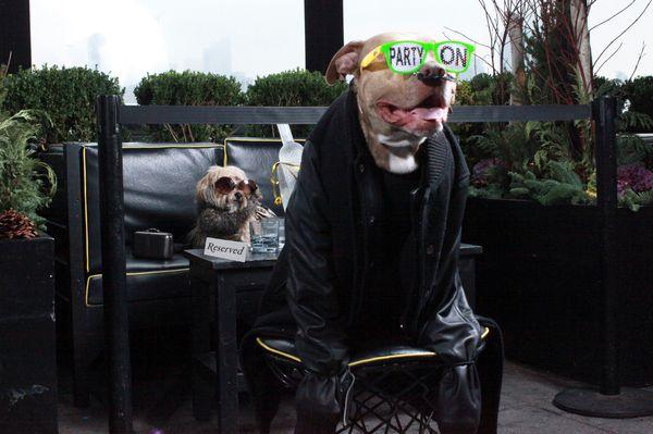 "<a href=""https://www.instagram.com/cheeky_the_dog/"" target=""_blank"">cheeky_the_dog</a> and <a href=""https://www.instagram.com"